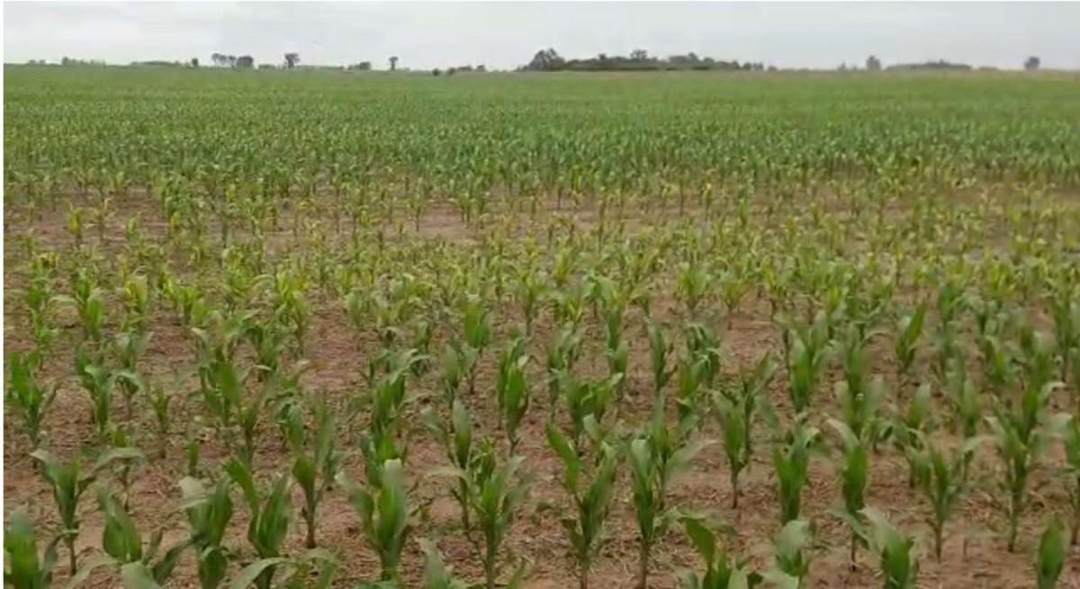 Aseguran que lloverá cada vez menos: una sequía creciente afectará al agro en los próximos meses