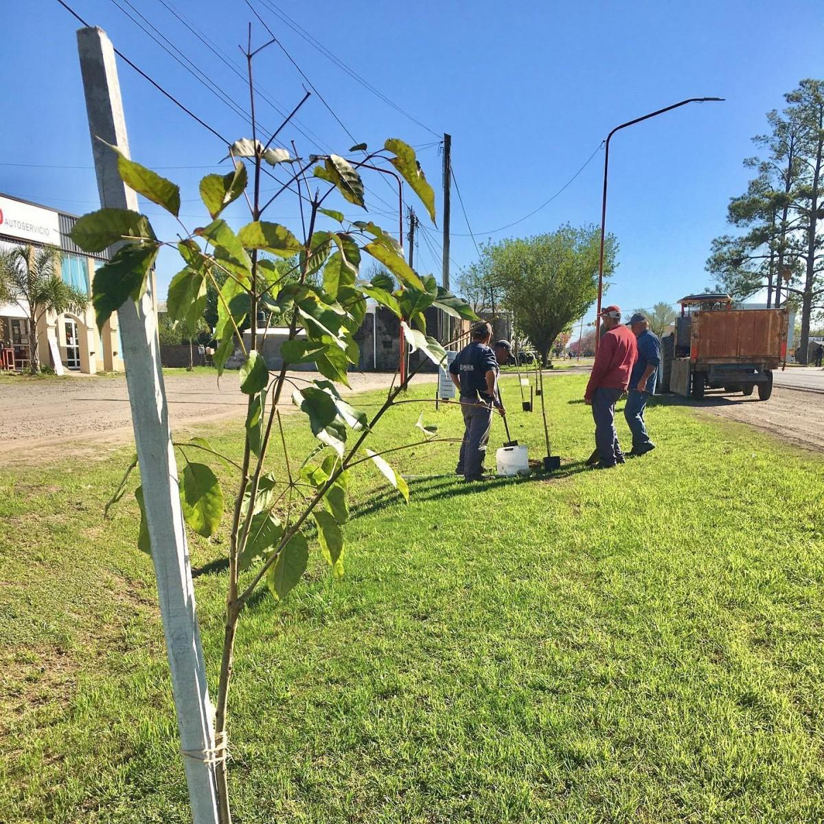 Franck continúa con su plan de forestación en las calles de acceso a la vecina localidad